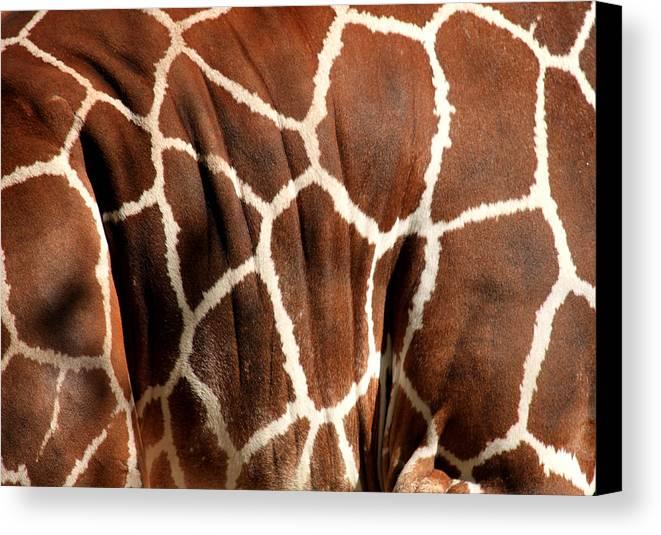 Giraffe Canvas Print featuring the photograph Wildlife Patterns by Aidan Moran