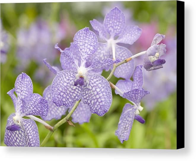 Ribet Canvas Print featuring the photograph Orchid Flower Bloom by C Ribet