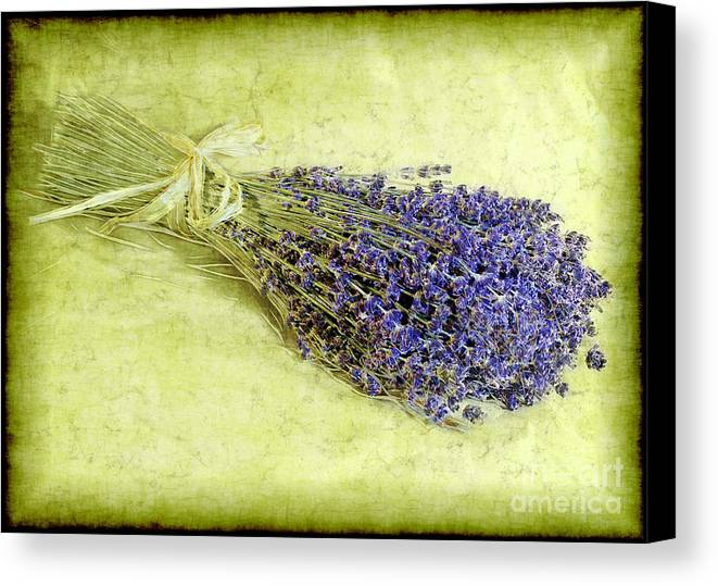 Lavender Canvas Print featuring the photograph A Spray Of Lavender by Judi Bagwell