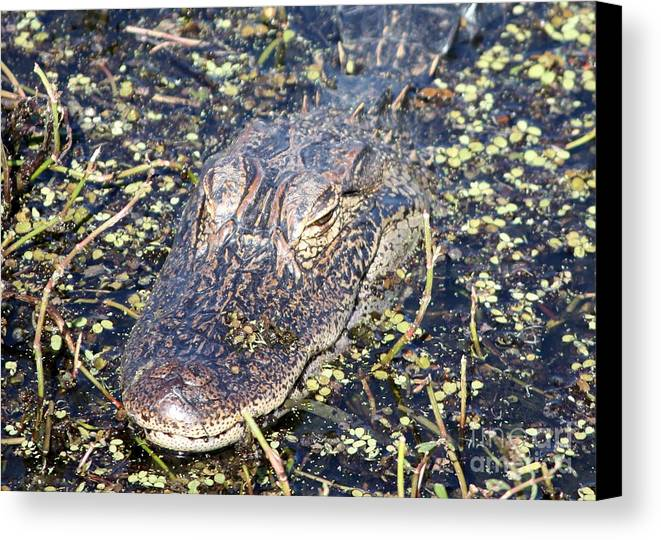 Gator Canvas Print featuring the photograph Camouflaged Gator by Carol Groenen