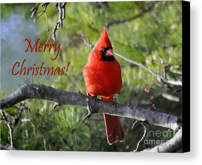 Nava Jo Thompson Canvas Print featuring the photograph Merry Christmas Cardinal by Nava Thompson
