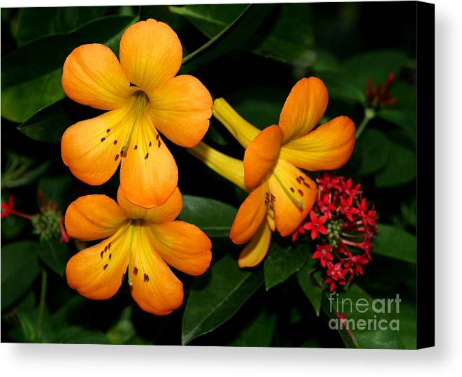 Rhododendron Canvas Print featuring the photograph Orange Rhododendron Flowers by Sabrina L Ryan