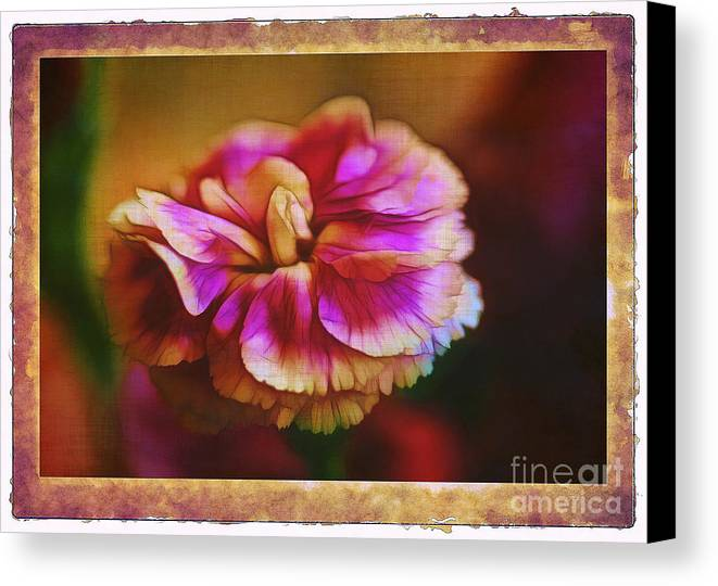 Carnation Canvas Print featuring the photograph Yesterday by Judi Bagwell