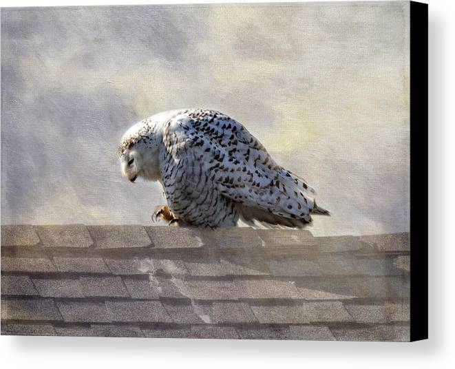 Birds Canvas Print featuring the photograph Snowy Owl by Betty Pauwels