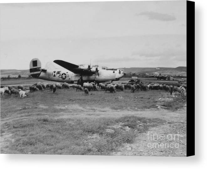 Pantanella Canvas Print featuring the photograph 1944 B-24 H Plane In Field W/ Sheeep Pantanella Airfield Italy by MountainSky S