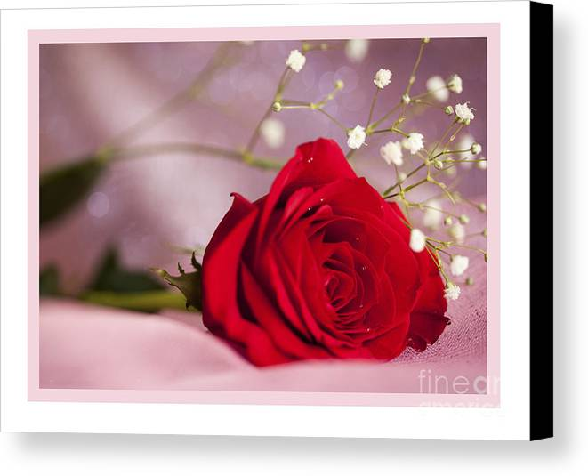 Flowers Canvas Print featuring the photograph All Occasion Rose by Donna Crider