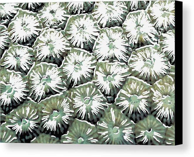 Starfish Canvas Print featuring the painting Coral Close Up by Lanjee Chee