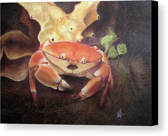 Animals Canvas Print featuring the painting Coral Crab by Adam Johnson