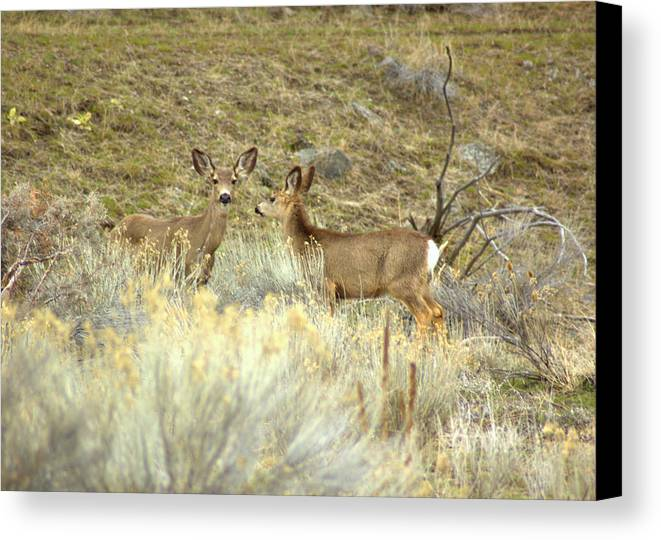 Deer Canvas Print featuring the photograph Deer by Scott Gould