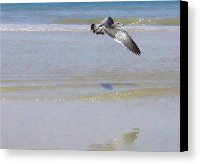 Seagull Canvas Print featuring the photograph Domain by JAMART Photography