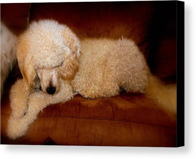 Dog Canvas Print featuring the photograph Doodle Prayers by Trudi Southerland