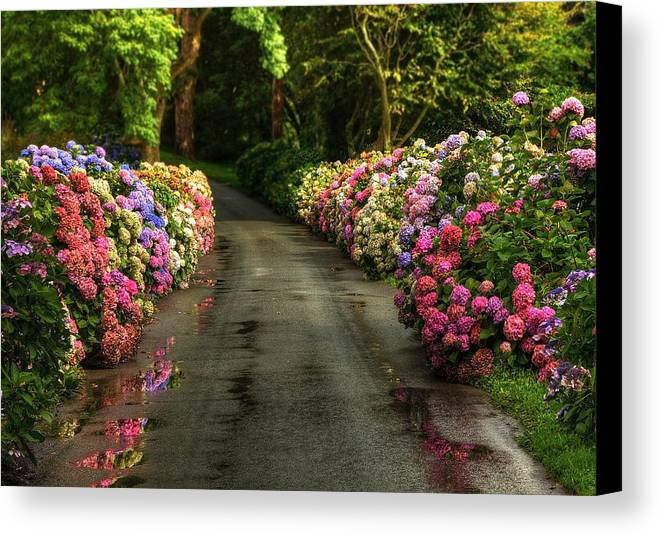 Road Canvas Print featuring the photograph Flower Road by Svetlana Sewell