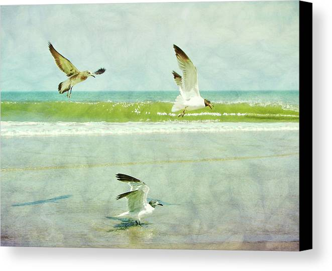 Seagull Canvas Print featuring the photograph Food Fight by JAMART Photography