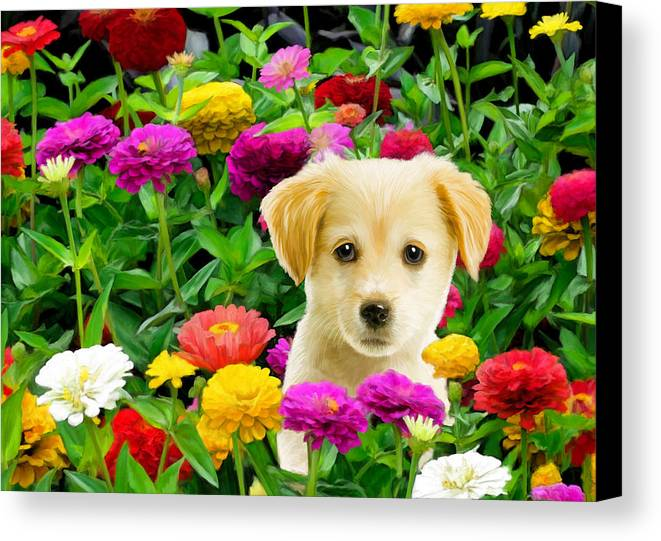 Puppy Canvas Print featuring the digital art Golden Puppy In The Zinnias by Bob Nolin