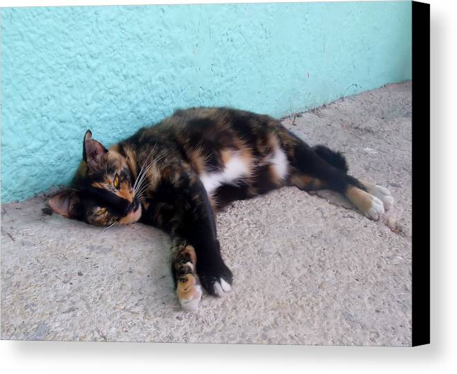 Cat Canvas Print featuring the photograph Hemingway Cat by JAMART Photography