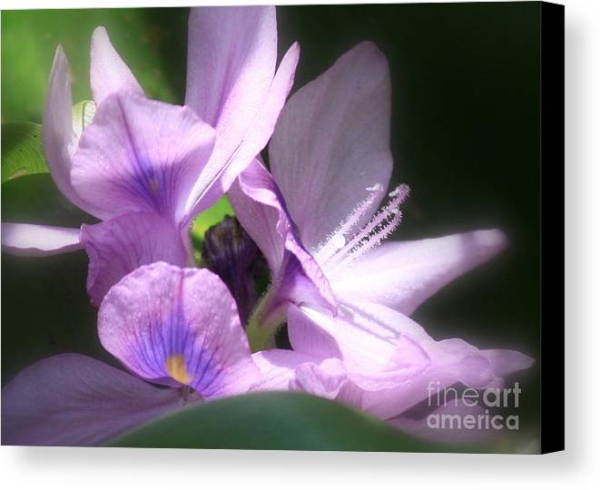 Flower Canvas Print featuring the photograph Hidden Gem In The Swamp by Carol Groenen