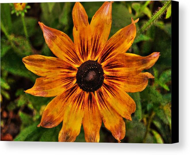 Flower Canvas Print featuring the photograph Indian Summer by JAMART Photography