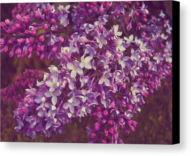 Lilac Canvas Print featuring the photograph Lilacs by JAMART Photography
