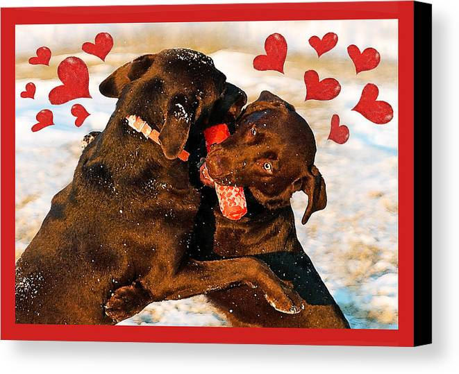 Chocolate Labs Canvas Print featuring the photograph Love Is In The Air by Dale Hall
