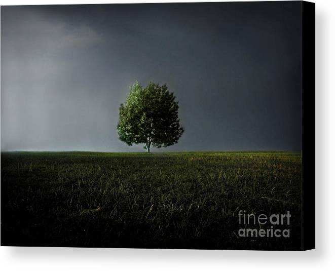 Blue Canvas Print featuring the photograph Maybe This Year Will Be Better Than The Last by Dana DiPasquale