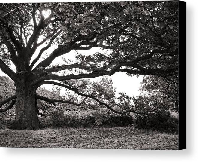 Tree Canvas Print featuring the photograph Mother Nature by Edward Myers