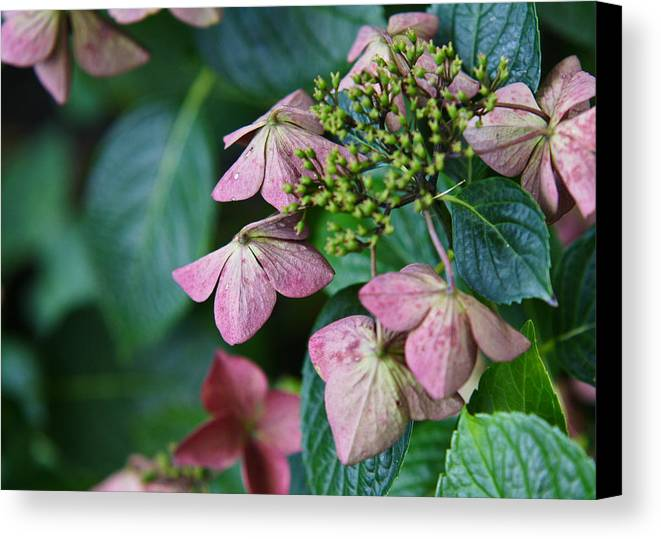 Flower Canvas Print featuring the photograph Pretty Old Flowers by Edward Myers