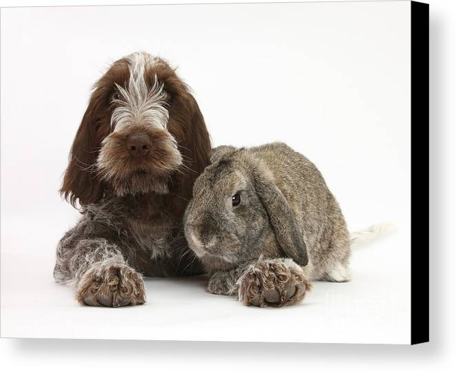 Animal Canvas Print featuring the photograph Puppy And Rabbt by Mark Taylor