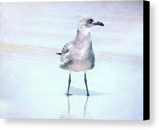 Seagull Canvas Print featuring the photograph Seagull Stance by JAMART Photography