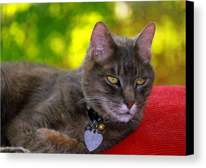 Kitty Canvas Print featuring the photograph Shadow's Glamour Shot by Suzanne Gaff