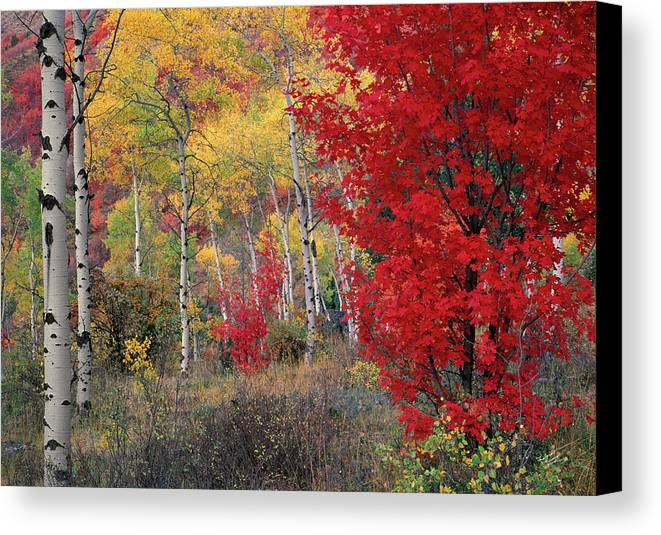 Idaho Scenics Canvas Print featuring the photograph Sheep Canyon In Autumn by Leland D Howard