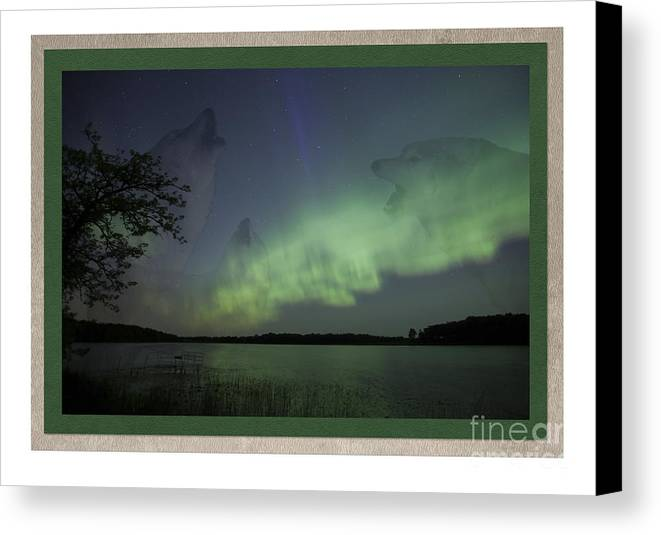 Minnesota Canvas Print featuring the photograph Spirit Wolf Collection - 2 by Donna Crider