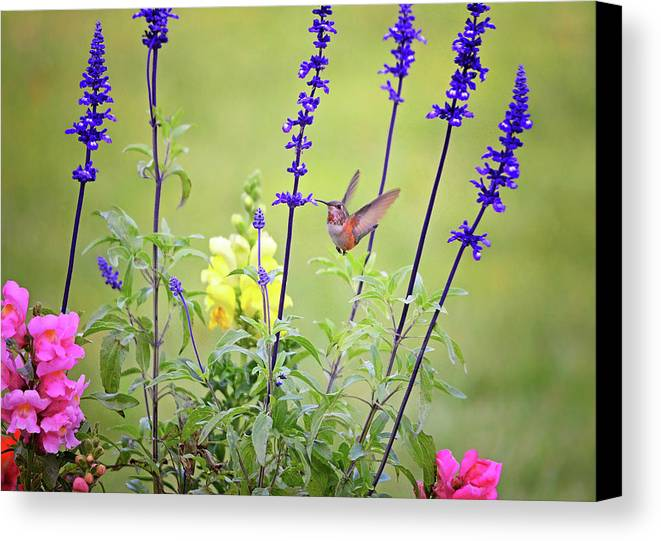 Gardens Canvas Print featuring the photograph Spring Beauties In The Garden by Lynn Bauer