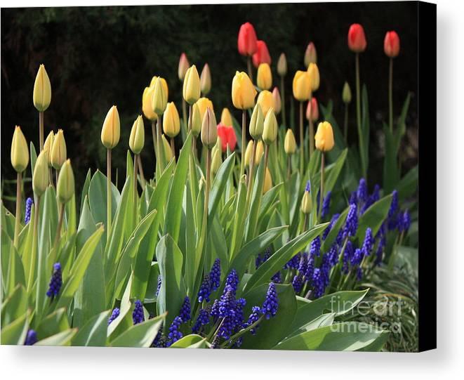 Spring Canvas Print featuring the photograph Spring Garden by Carol Groenen