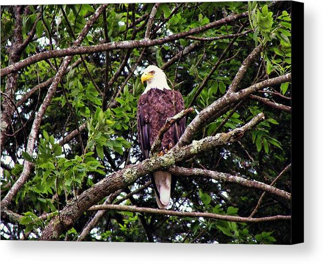Eagle Canvas Print featuring the photograph Strength by JAMART Photography