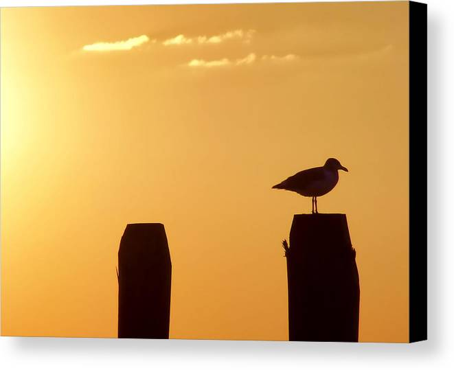 Beach Canvas Print featuring the photograph Sun Is Rising by JAMART Photography
