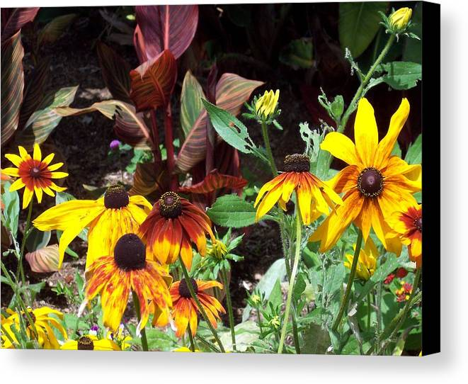 Sunflower Canvas Print featuring the photograph Sunflowerland by Jean Booth