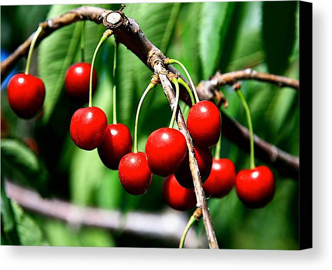 Cherry Canvas Print featuring the photograph Sweet Cherry Pie by Robert Pearson