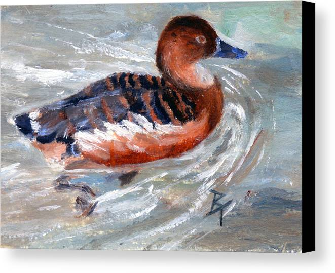 Duck Canvas Print featuring the painting Swimming Aceo by Brenda Thour