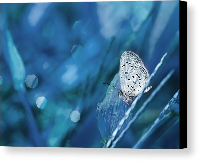 Macro Canvas Print featuring the photograph The Baby Dancing by Amri Arfianto