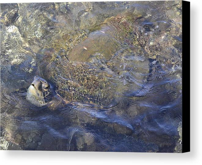 Sea Turtle Canvas Print featuring the photograph The Swim by Karen Rose Warner