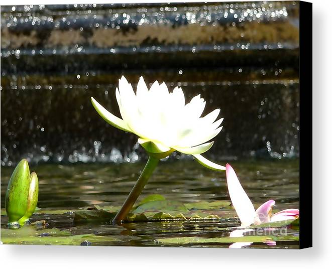 Travel Canvas Print featuring the photograph Urban Lily by Anna Duyunova
