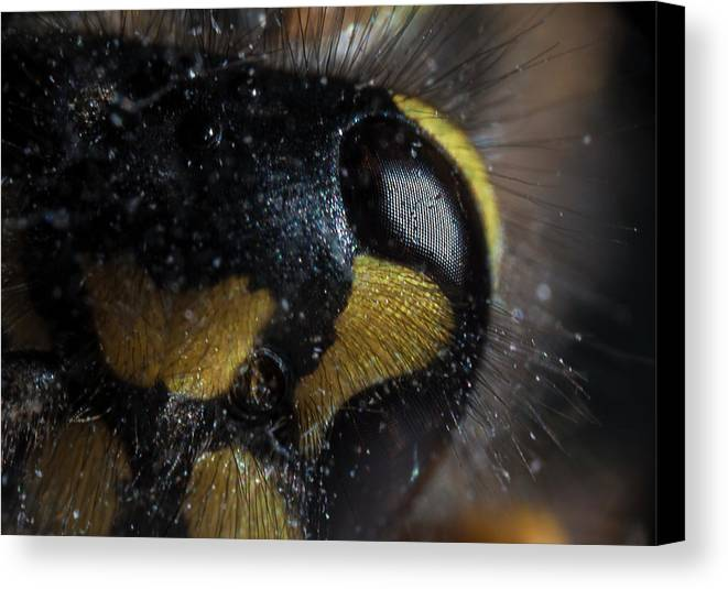 Wasp Canvas Print featuring the photograph Wasp Eye by Anders Larsen