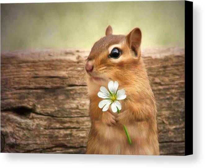Chippy Canvas Print featuring the photograph Welcome Spring by Lori Deiter