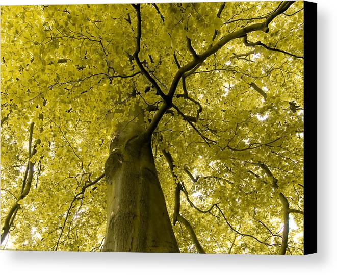 Countryside Canvas Print featuring the photograph Yellow Tree by Svetlana Sewell