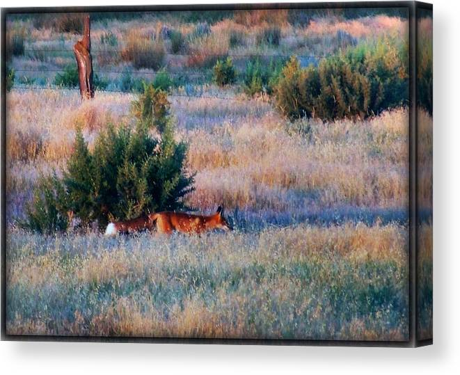 Animals Canvas Print featuring the photograph Early Morning Prowler by Joe Bledsoe