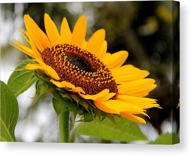 Floral Canvas Print featuring the photograph Get Up by Annett Meyer