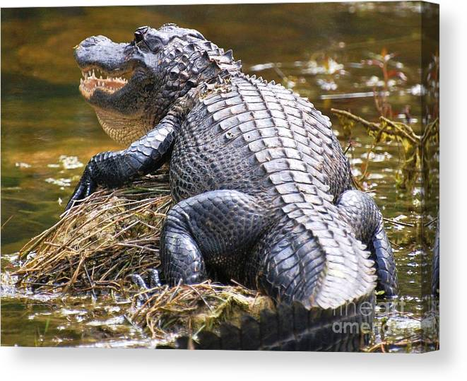 Wildlife Photographs Canvas Print featuring the photograph Looking For Lunch by Karen English