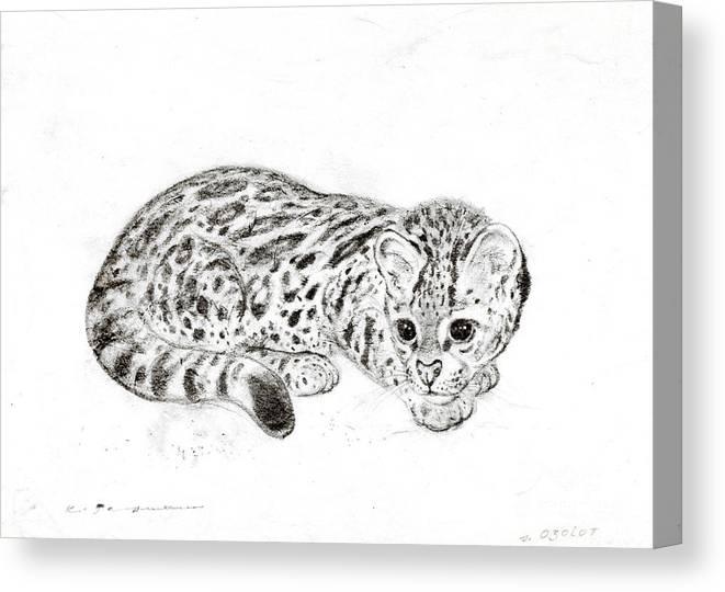 Ocelot Canvas Print featuring the drawing Ocelot Kitten by Kurt Tessmann