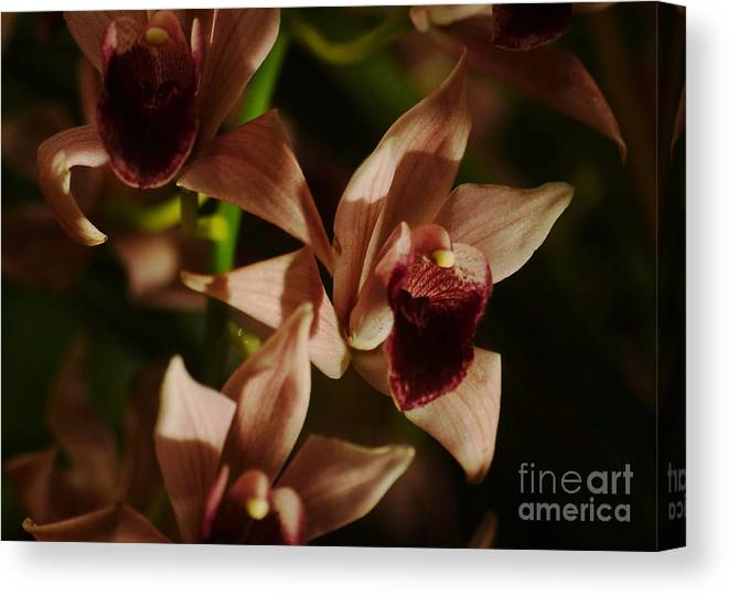 Plant Canvas Print featuring the photograph Orchid 137 by Rudi Prott