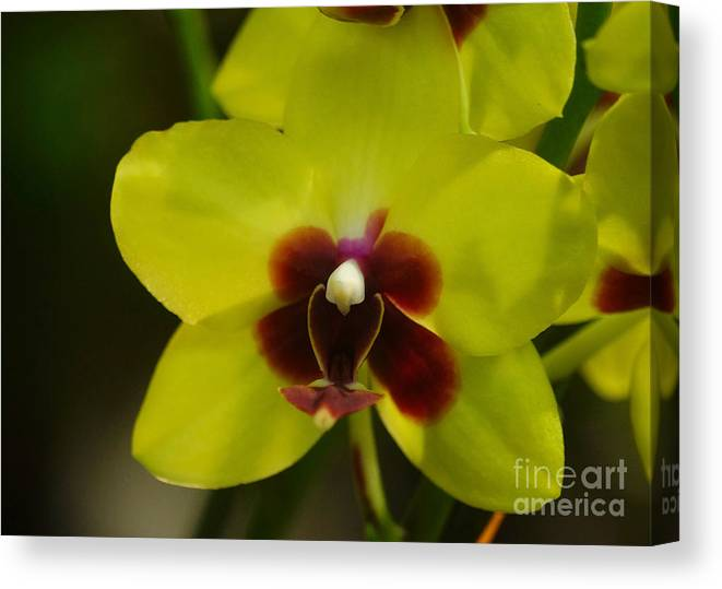 Plant Canvas Print featuring the photograph Orchid 153 by Rudi Prott